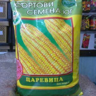1кг-Семена царевица КНЕЖА 509