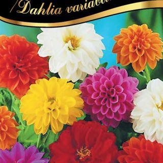 Далия гъста/Dahlia variabilis /