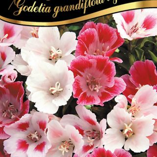 Годеция/Godetia grandiflora azal./