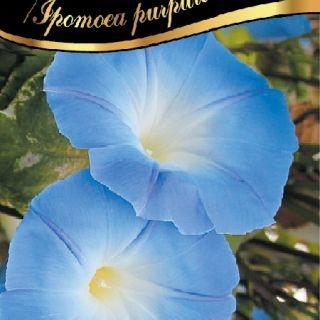 Синьо грамофонче,Фунийки /Ipomoea purpurea /