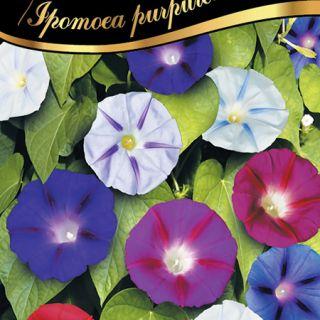 Грамофонче,Фунийки mix/Ipomoea purpurea /