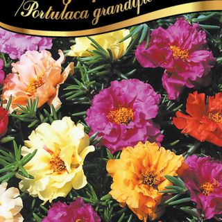 Калдъръмче /Portulaca grandiflora /