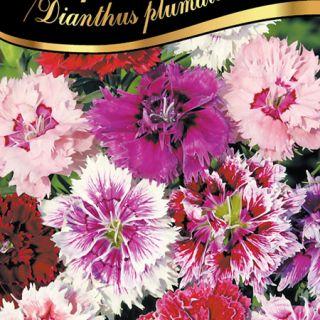 Карамфил нисък /Dianthus plumarius /