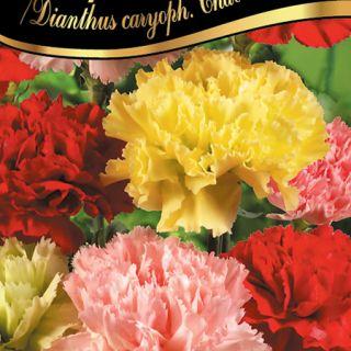 Карамфил Шабо/Dianthus caryoph. Chabaud /