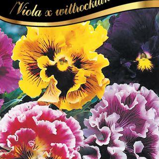Теменуга къдрава /Viola wittrockiana /
