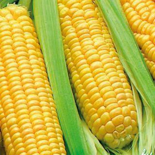 Захарна царевица- Golden Bantam- 50гр.