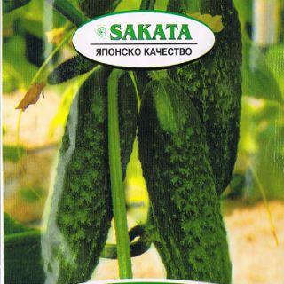 Ронда-Корнишони-30бр.семена