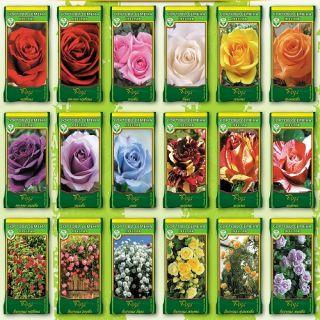 Рози Корени