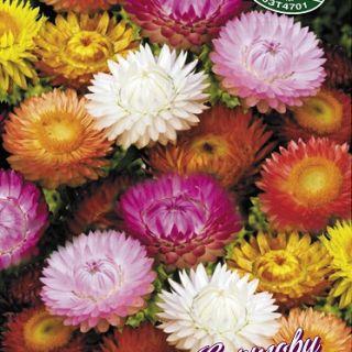 Хелихризум /Сухо цвете/